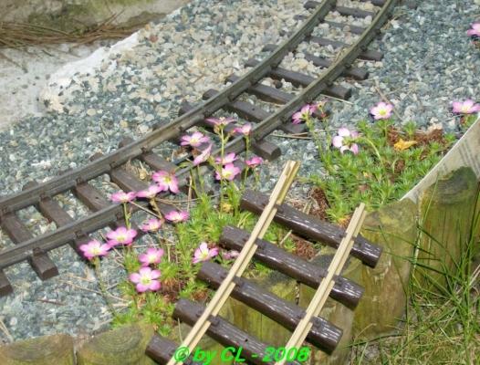 Gartenbahn_0064
